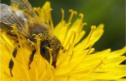 arlon quot la ruche qui dit oui quot est nee a arlon