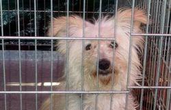 la police saisit 26 chiens et 7 chats chez un couple de gilly