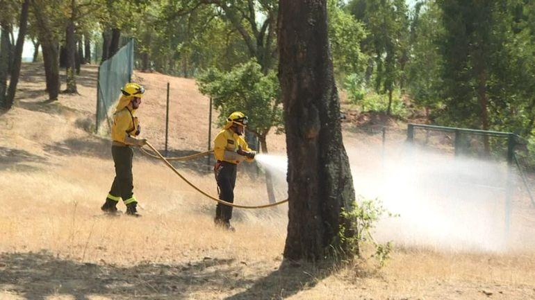 Portugal: des pompiers privés pour préserver les plantations d'eucalyptus