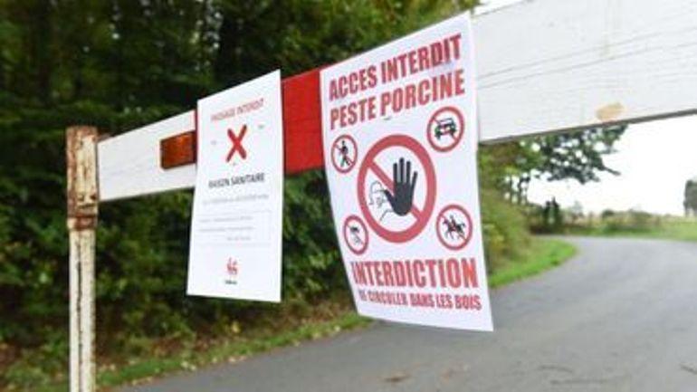 Peste porcine africaine: le CD&V craint une propagation du virus à la Flandre
