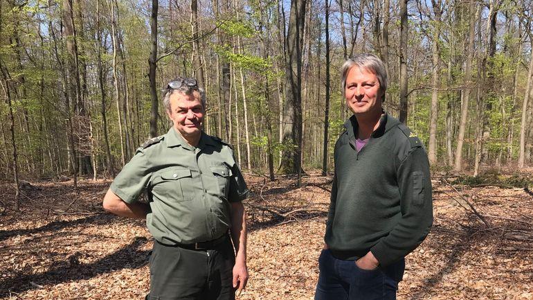 La Forêt de Soignes se dote d'un nouveau plan de gestion