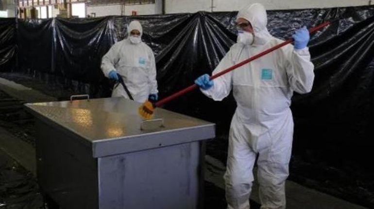 Peste porcine africaine: le nombre de sangliers infectés continue à augmenter
