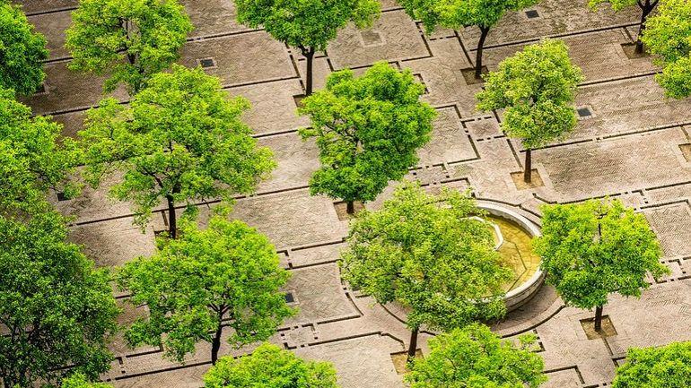Les forêts urbaines: bénéfiques mais complexes à mettre en place