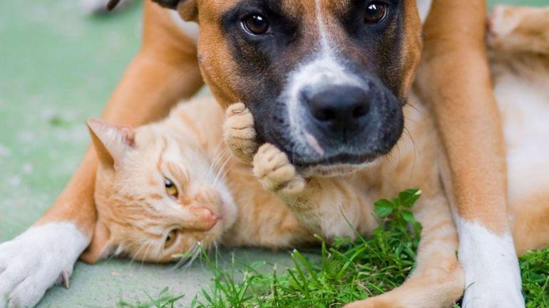 Nos animaux peuvent-ils nous transmettre ou attraper le coronavirus, toutes les réponses à vos questions?