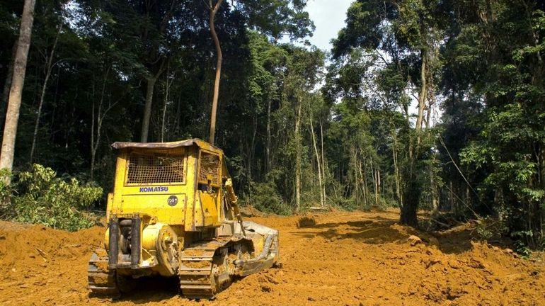Des banques françaises sont accusées de financer des projets liés à la déforestation
