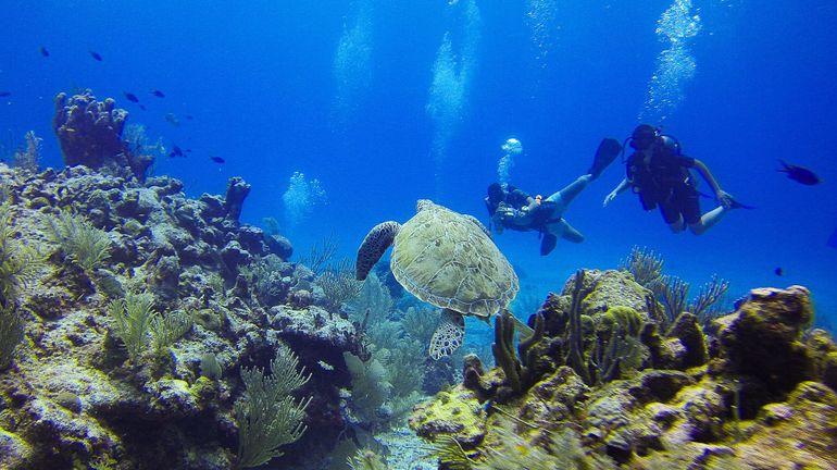 Explorer les profondeurs de l'océan Indien pour prédire les tsunamis