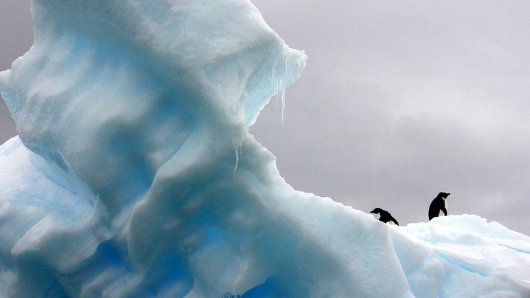 Les chasseurs d'iceberg: ce nouveau métier qui profite de la fonte des glaciers pour faire fortune