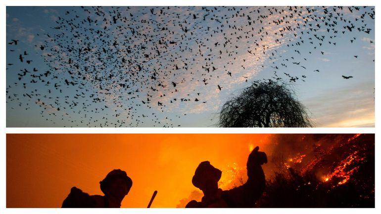 USA: dans le Sud-Ouest, des centaines de milliers d'oiseaux tombent du ciel