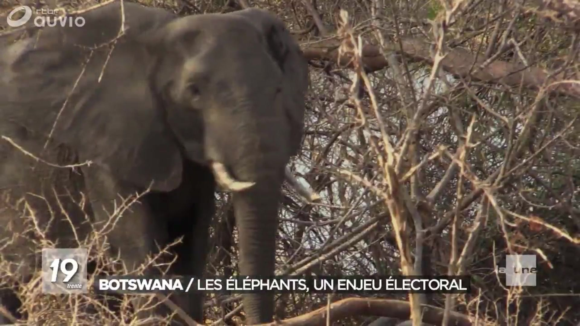 Signification Elephant Porte Bonheur https://www.rtbf.be/auvio/detail_contacts-express?id=2556907
